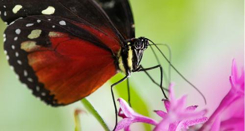 Standard ska skydda den biologiska mångfalden