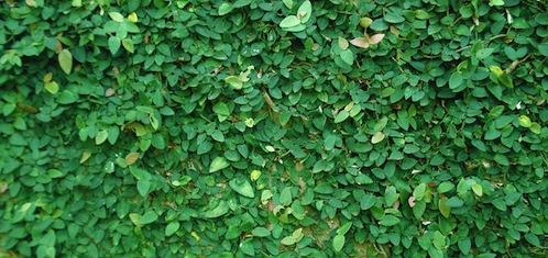 Från gröna tak till gröna väggar