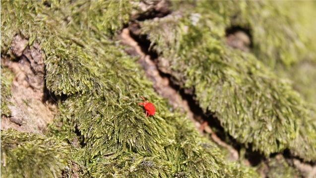 Ekosystemtjänster ska in i svensk förvaltning