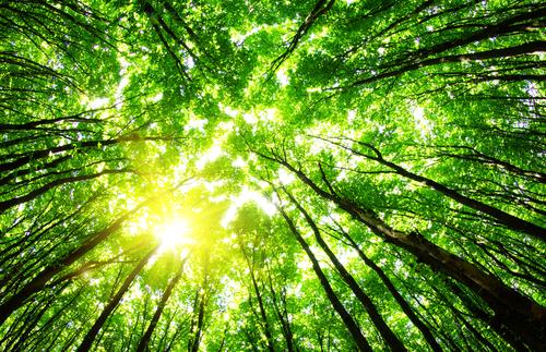 Åtta av tio beredda betala för bättre miljö
