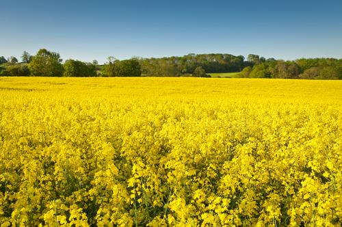 Fördubblad användning av biodrivmedel