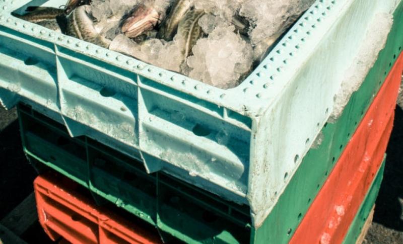 Regler för spårbarhet av fisk försenas