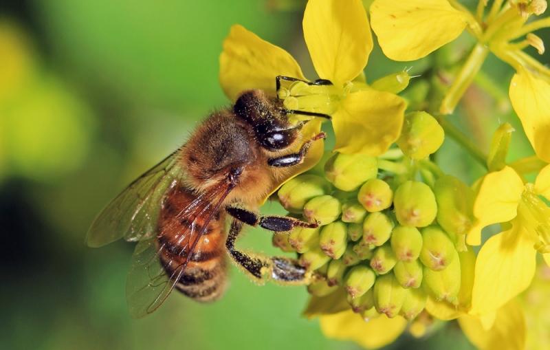Bekämpningsmedel kan ha dödat 50 miljoner bin i Kroatien