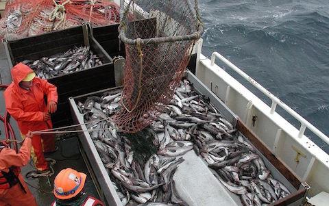 Smart metodik hjälper fiskeindustrin att ställa om