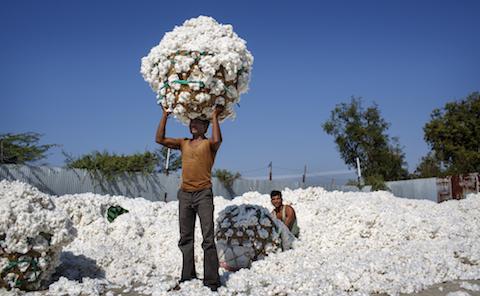 Ikea bäst i världen på hållbar bomull