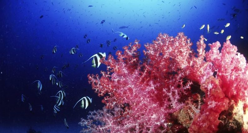 Thailand i startgroparna att rena hav från skräp