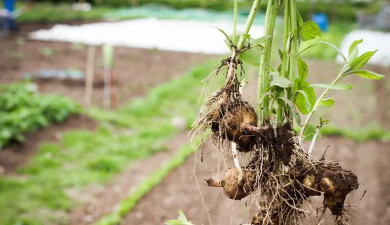 Växjö med och startar europeiskt nätverk för ekologisk mat