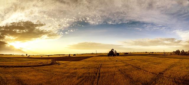Miljardinvestering i dränering av jordbruksmark krävs
