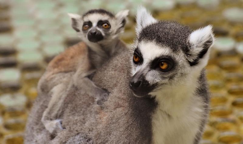 Hälften av världens djur- och växtarter riskerar försvinna