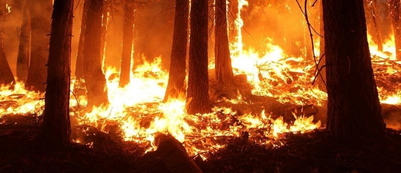Rapport om fem grader varmare klimat
