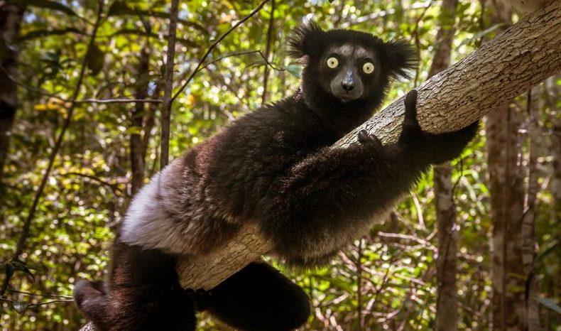 Ny forskning: Om 50 år kan dessa däggdjur vara utdöda