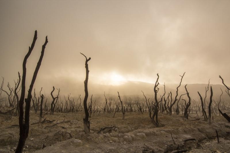 Sverige slår rekord i klimatrapportering