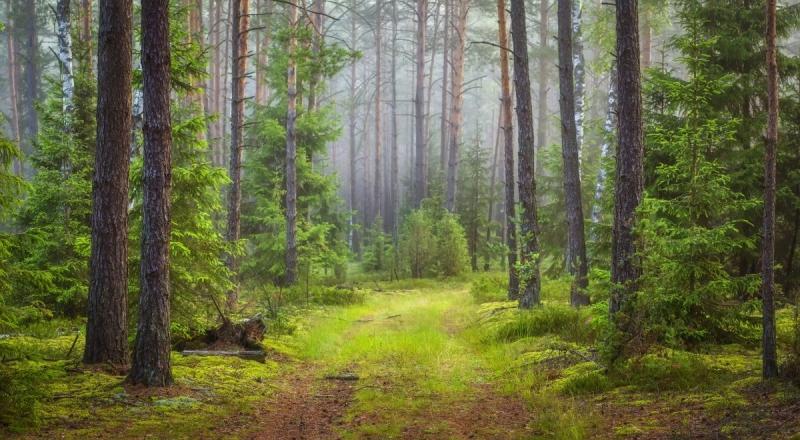 Trenden: Ökat intresse för ekologisk kompensation
