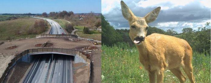 Djuren gör fotosuccé på Sveriges största djurbro