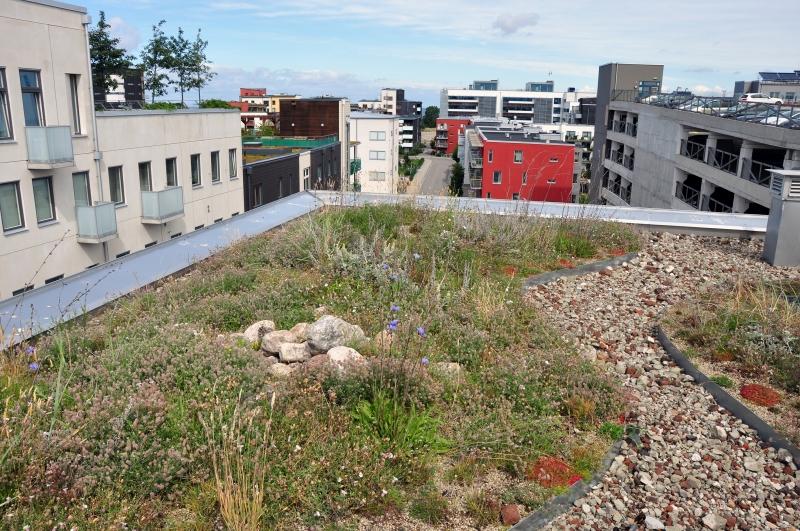 Grön infrastruktur räddade bostadsområde från översvämningsskador