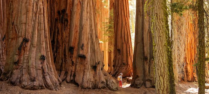 Ideell miljöorganisation köper uråldrig skog för 154 miljoner