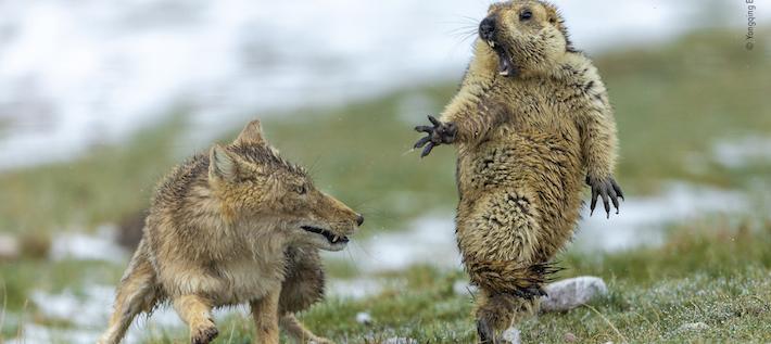 Bildspecial: Världens bästa naturfotografer på 2 minuter