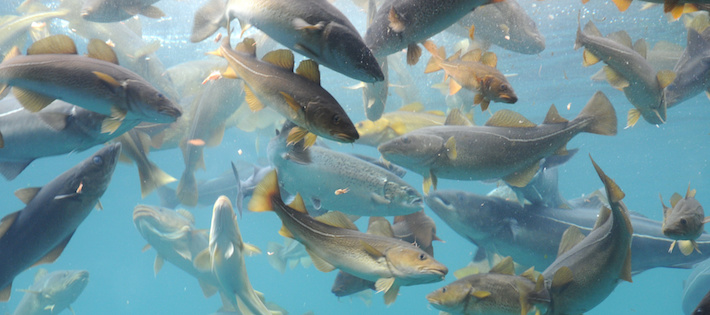 EU-förslag kan leda till ökat överfiske