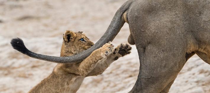 14 roliga djurbilder tagna i exakt rätt ögonblick