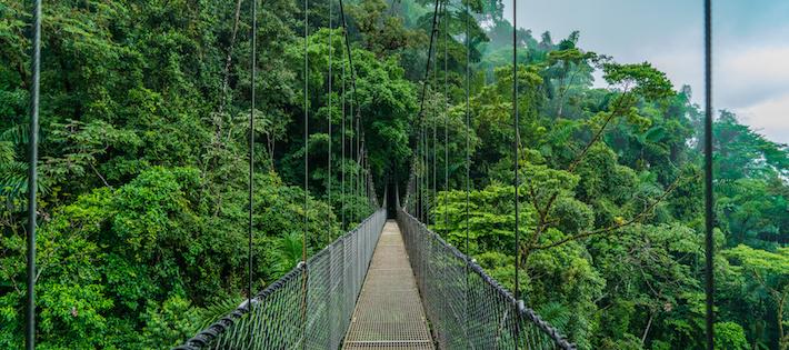Centralamerika ska återställa 10 miljoner hektar skog