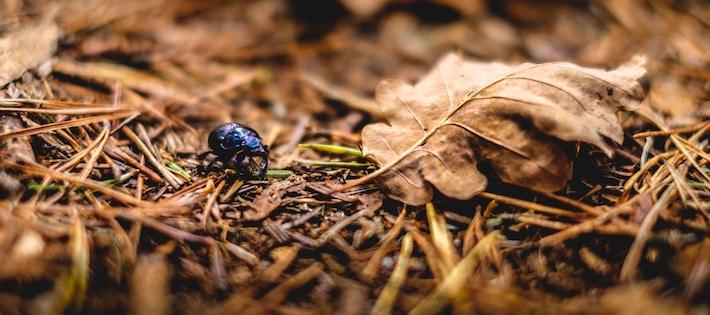 Insekter i skogen oroar – är nya miljöbovar