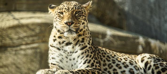 Ryssland vill öka den biologiska mångfalden – skyddar 2 200 000 hektar natur