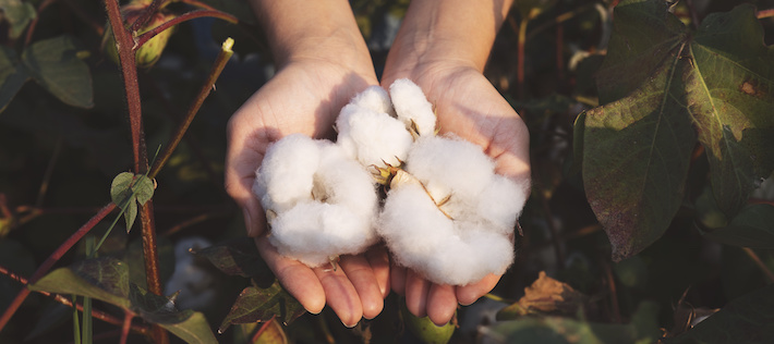 Lista: Bolagen som är bäst på hållbar bomull
