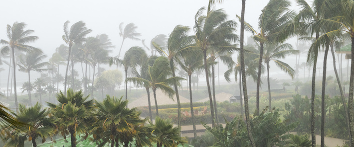 Tropiska cykloner hot mot livsmedelsmarknaden