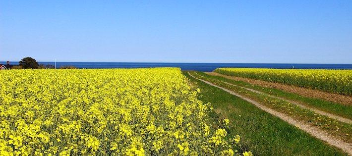 Ny forskning: Drastisk förändring i Skånes flora