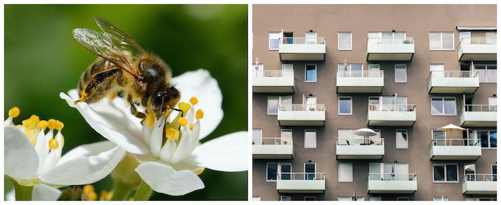 Stadens form har stor betydelse för pollinatörer