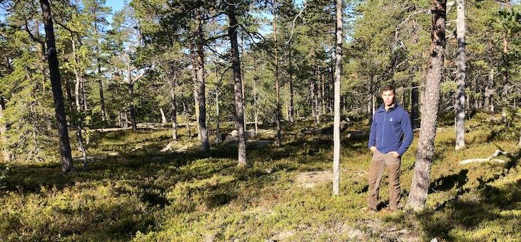 Forskning: Fler gamla skogar behövs