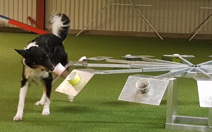 Hundarna som nosar upp miljögifter