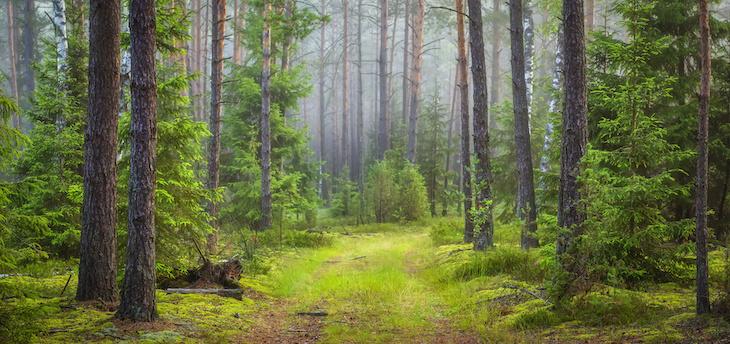 Sveaskogs nya inriktning kritiseras av miljörörelsen