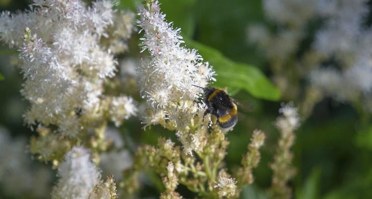 Förbud mot växtskyddsmedel på allmänna platser