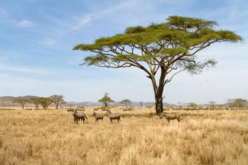 Växtlighetens upptag av koldioxid riskerar att minska