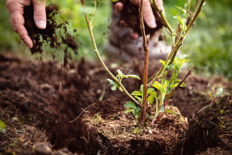 Nytt verktyg underlättar valet av trädplanteringsprojekt