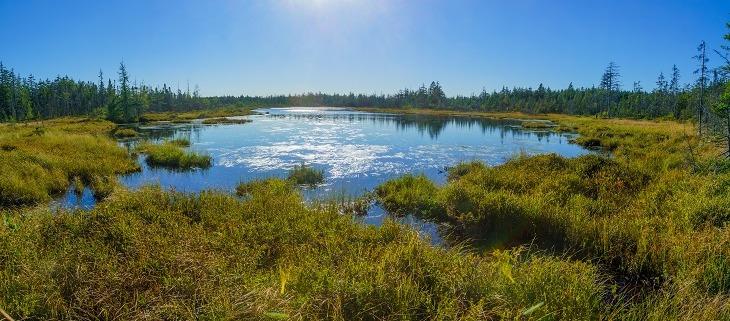 Våtmarkerna gör comeback