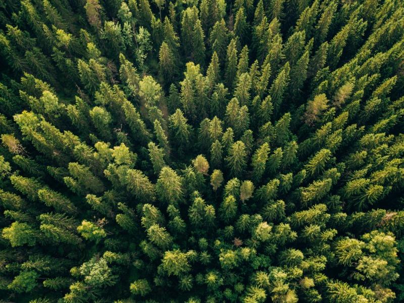 Sverige ska rapportera mer skyddad natur