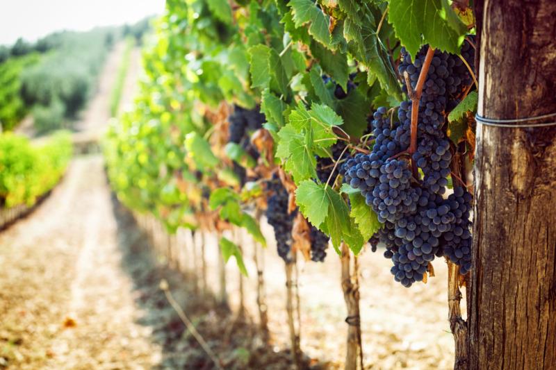 Tvångsarbete bakom italienska viner på Systembolaget