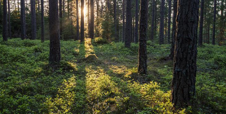 Lokal klimatkompensation på gång i Sverige