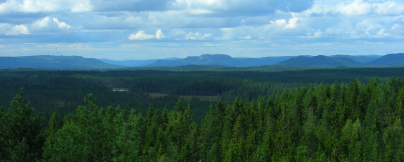 Delade åsikter kring regeringens satsningar på skog och natur