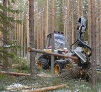Skogsavverkare utbildas i grön körstil