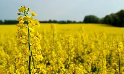 Global standard för biobränslen på gång