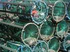 Giftig fisk får fortsätta att säljas