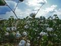 H&M bäst på att använda ekologisk bomull