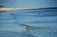 Forskningsmiljoner ska rädda Östersjön